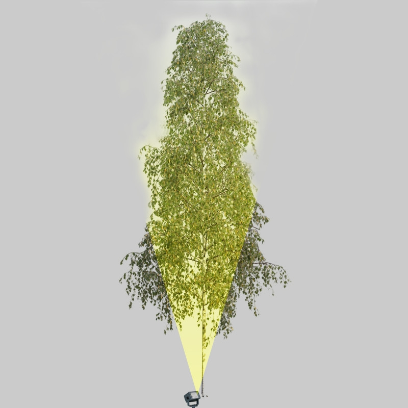 Lighting tall narrow open canopy trees